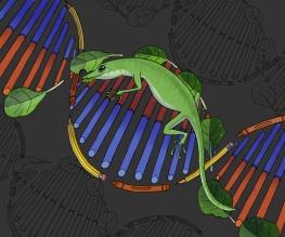 lizard editorial